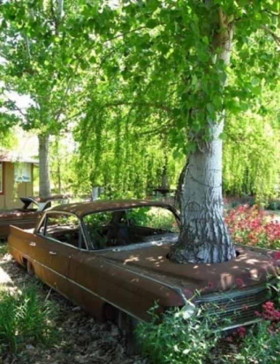 مجموعة من الصور توضح مدى إصرار وقوة هذه الأشجار في التوسع وابتلاع ما حولها.