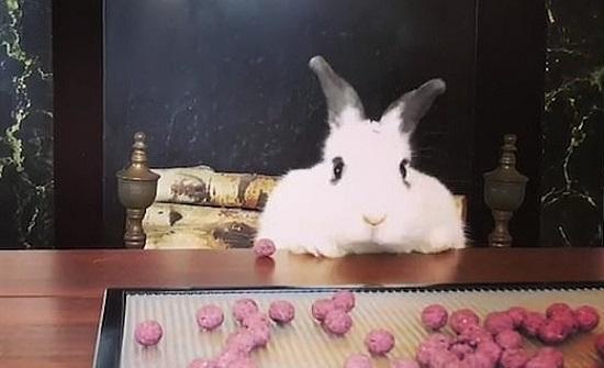 بالفيديو والصور : محاولة أرنب للحصول على الحلوى تنتهي بسقطة طريفة