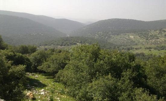تعيين 50 عاملا لحماية الغابات في عجلون