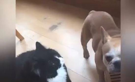 قطط تنفذ مقالب شريرة وغير متوقعة (فيديو)