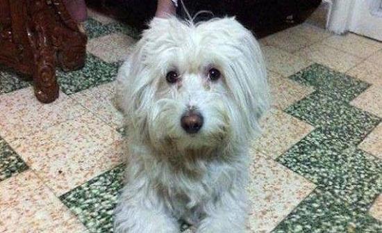 في زمن الحرب..كلب ضائع في دمشق ومليون ليرة لمن يجده