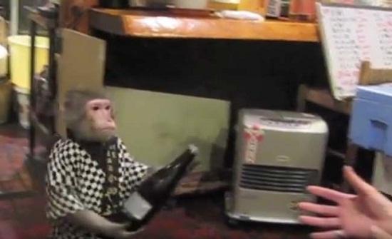"""غرائب كوكب اليابان: نادلة """"قردة"""" تتقاضى راتباً من الموز!"""