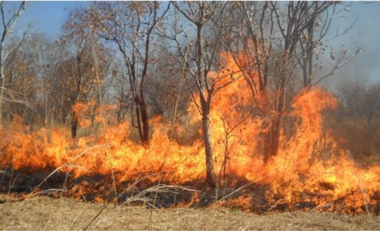إخماد حريق أعشاب جافة وأشجار حرجية وحظيرة أغنام في جرش