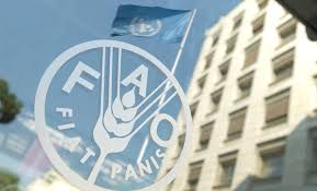 تقرير لمنظمة الفاو: انخفاض أسعار الأغذية في كانون الأول الماضي