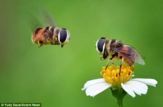بحث التعاون بين البحوث الزراعية وجامعة بومرداس الجزائرية في مجال بحوث النحل