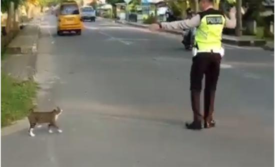بالفيديو : ضابط مرور يساعد قطة على عبور الطريق المزدحم