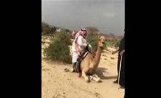 موقف محرج لرجل بدين أثناء اعتلاء ظهر ناقة (فيديو)