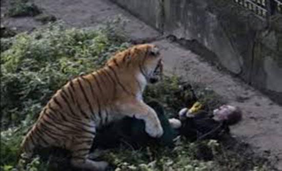 بالصور : في هجوم شرس.. نمر ينقض على حارسته أمام الجميع!