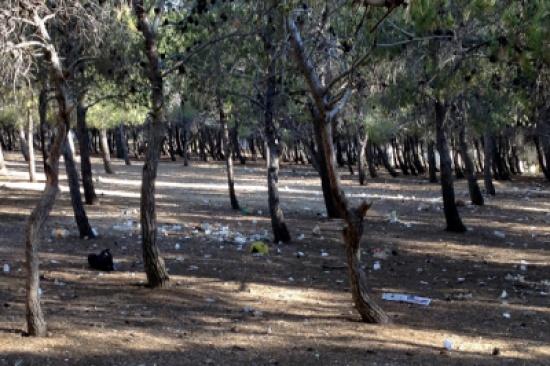 حملة بيئية لتنظيف غابات مدينة الحسين للشباب السبت المقبل