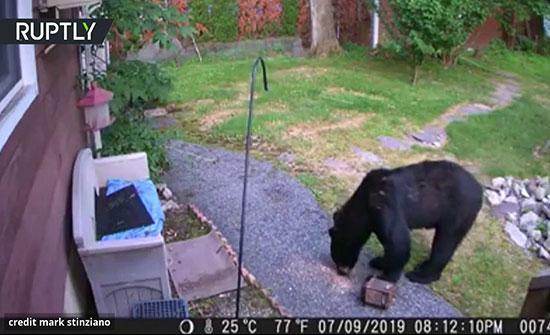 """امريكا : كلب يطارد دبا دخل فناء بيت ريفي في نيوجيرسي """"فيديو"""""""