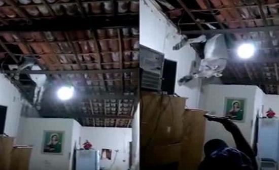 بالفيديو.. حمار يفاجئ أسرة ويسقط عليها من السقف