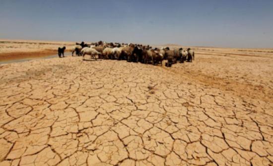 90% من مساحة المملكة مهددة بالتصحر