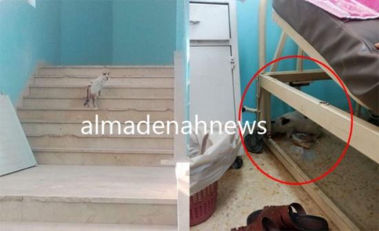 بالصور : قطط بداخل غرف المرضي في مستشفى حكومي اردني   المدينة نيوز