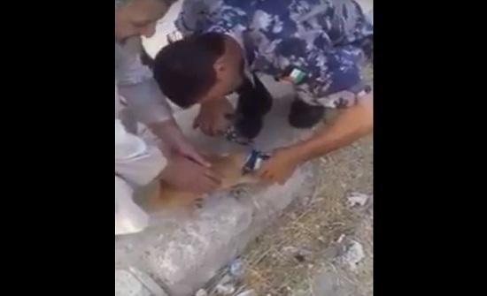 بالفيديو ... الطفيلة : الدفاع المدني ينقذ قطة علقت بعلبة مرتديلا