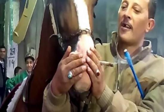 بالفيديو : هذا ما حدث للحصان بعد إجبارة على شرب الحشيش !