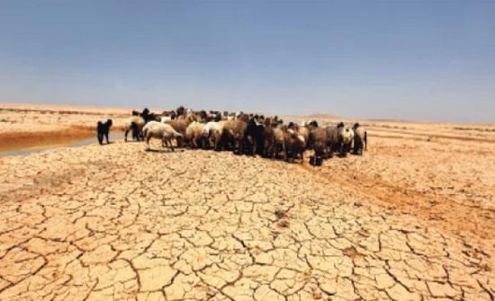 نظام خاص لتغير المناخ يوجب تشكيل لجنة وطنية لمتابعة تنفيذ سياساته