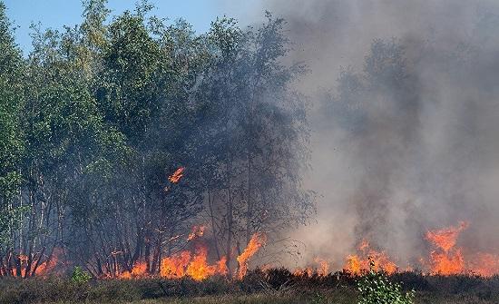 روسيا: حرائق سيبيريا مفتعلة