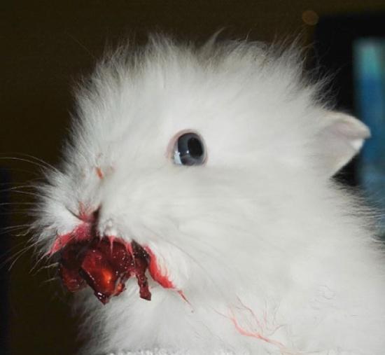 بالصور: حيوانات لا تستطيع مقاومة لذة التوت والفراولة E8cb5a3033acbb53a1bf3628ecc9f8c1