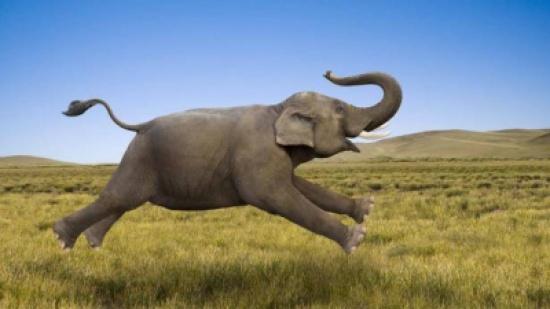 سلحفاة محظوظة... تنجو من الموت تحت أقدام الأفيال (فيديو)
