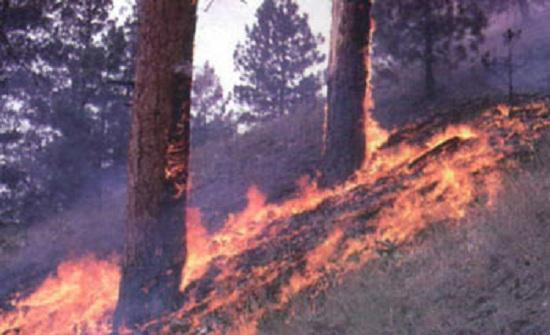انتهاء عمليات إخماد الحريق على امتداد الشريط الغوري