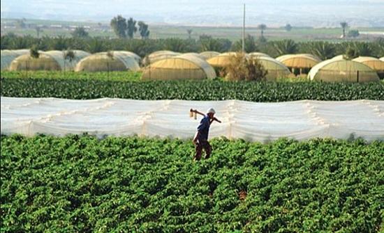 مشروعات زراعية بمحافظة الزرقاء بقيمة 700 ألف دينار