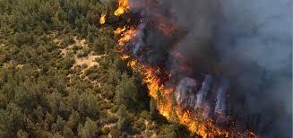 اختتام دورة اطفاء حرائق الغابات في عجلون