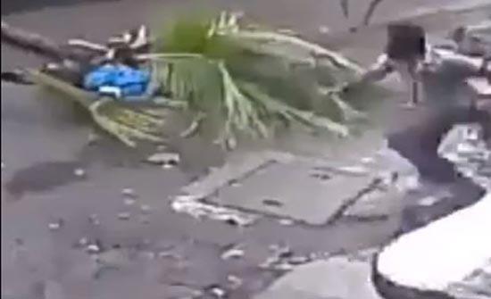 لحظة سقوط شجرة على شخص  ( فيديو )