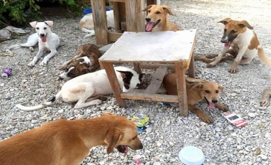 المفرق: الكلاب الضالة تنهش وتعقر 4 أشخاص