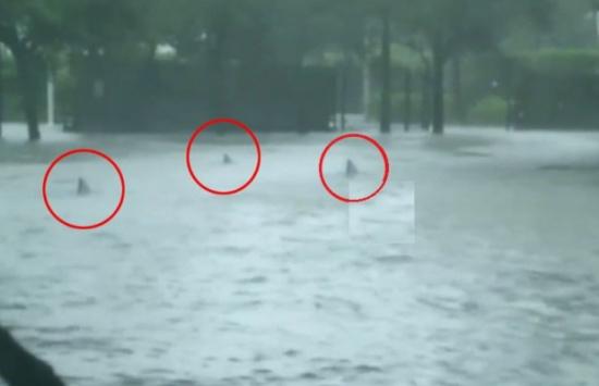 """[شاهد] لقطات صادمة .. أسماك قرش تظهر بالفيضانات في شوارع """"ميامي"""" بفعل إعصار """"إرما""""!"""