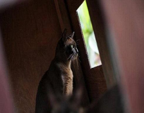 بالصور..تهريب مئات القطط إلى الصين لأكلها!