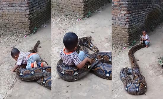 فيديو| طفل جعل أفعى ضخمة تلتف عليه ليلهو معها!!
