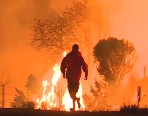 شاب يخاطر بحياته لإنقاذ أرنب من حرائق الغابات (فيديو)