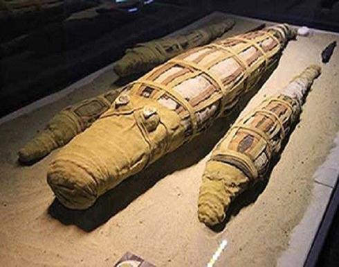 اكتشاف مومياء لتمساح عملاق في مصر