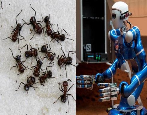 كيف يمكن للنمل الكسول أن يفيد بصناعة الروبوتات؟
