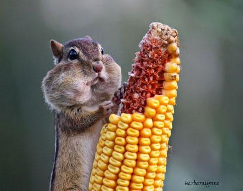 """الصور الرابحة بجائزة أفضل تصوير للحياة البرية من جميع أنحاء العالم 30 صورة """" !"""