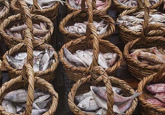 بعد ارتفاع أسعار الأسماك.. 10 أطعمة بديلة غنية بـ الفوسفور