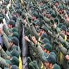 حزب الله يصل بلبنان الى الهاوية