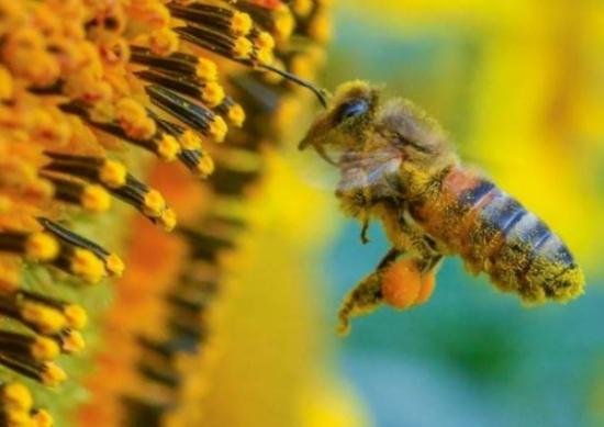 الحشرات توفر 1.4 مليار وظيفة حول العالم.. كيف؟