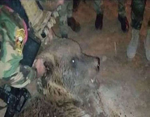 بالصور.. قوة عسكرية تقتل دبا هاربا غربي العراق