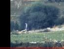 شاهد .. استهداف إسرائيلي لفلسطينيين في غزة
