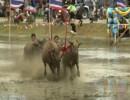 لقطة من السباق