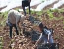 مزارعون في فلسطين