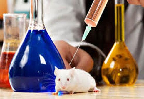 الفئران تشخص مرض السل!