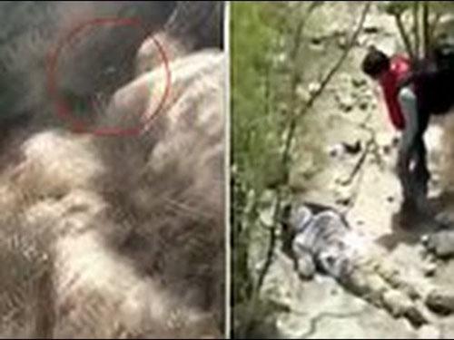 فيديو: لحظة سقوط سائح من فوق سور الصين العظيم