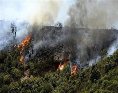الجزائر تعلن السيطرة على كل حرائق الغابات