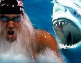 شاهد ..مواجهة نارية بين سبّاح عالمي وقرش أبيض تحت الماء