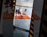 بالفيدبو : قرود تهاجم مدرسة وتشارك المعلمات الفطور بمكة