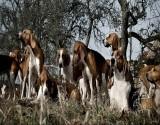 فرنسا : ذهبت للتنزّه مع كلبها.. فقتلتها مجموعة كلابٍ شرسة!