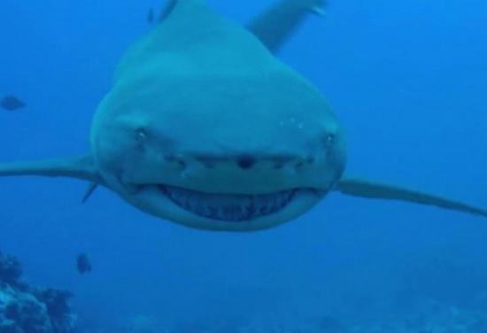 فيديو: قرش يهاجم عالمة بحرية في المحيط.. وحوت ينقذها من موت محقق !