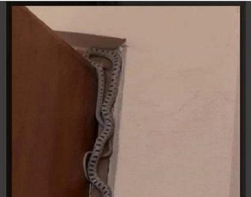 حماة عربية تتهم كنّتها بوضع أفعى في غرفتها
